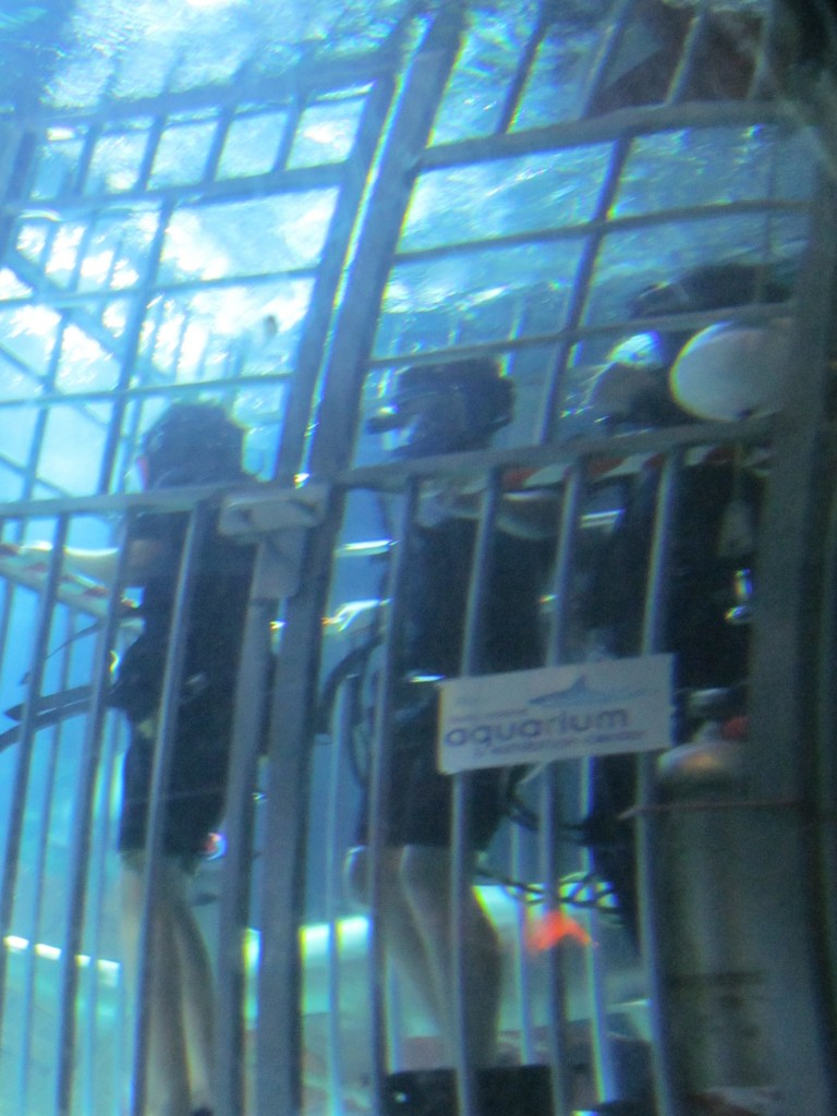 My son and his friend doing the shark dive at the Long Island Aquarium - real brave 13 year olds!