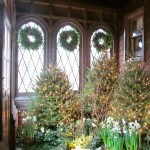 Christmas time at Bayard Cutting Arboretum.