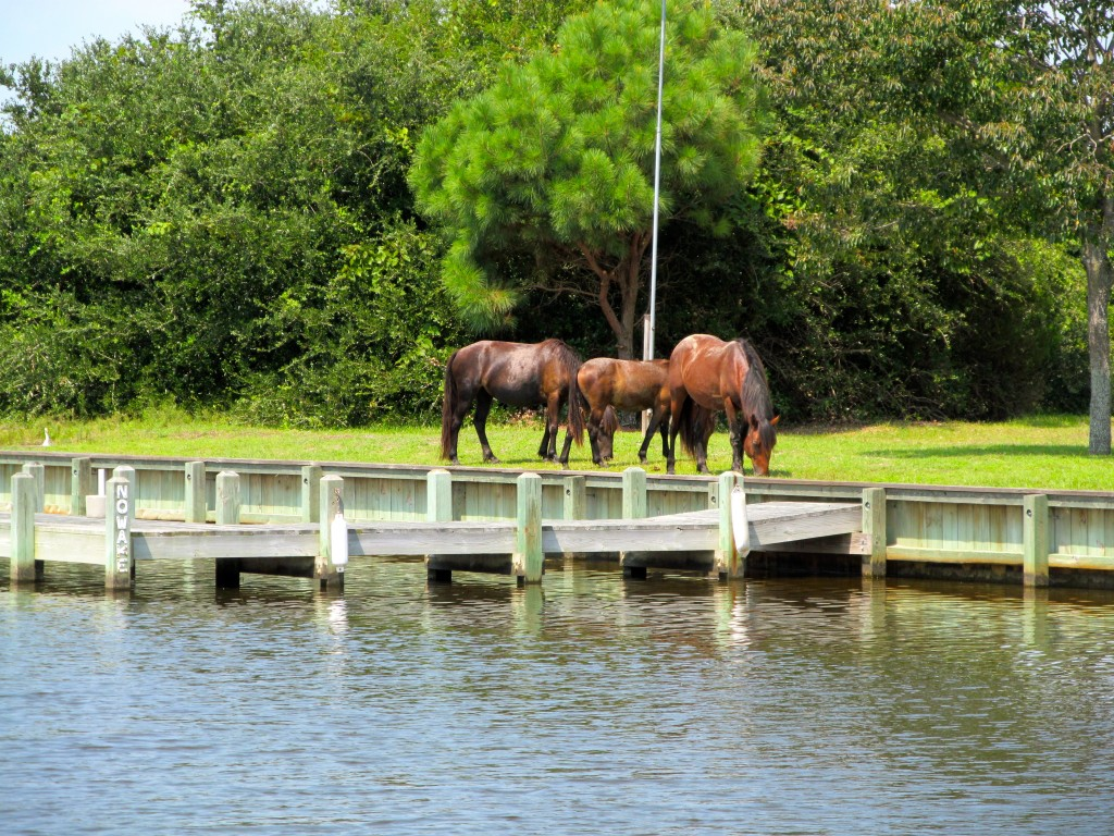 Wild Horses on the lawn of a beach house.